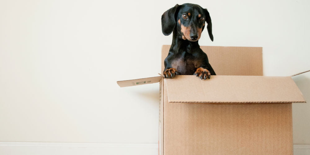 moving to downsizing